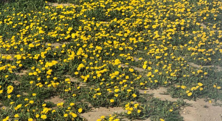 rośliny i kwiaty w ogrodzie